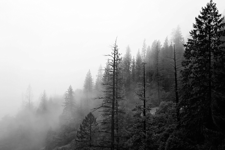 Yosemite National Park trees with fog